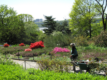Heather Garden