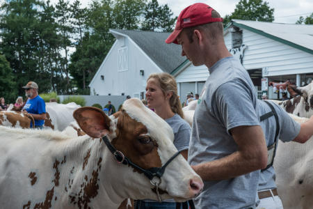 Cattle on display, Dutchess County Fair