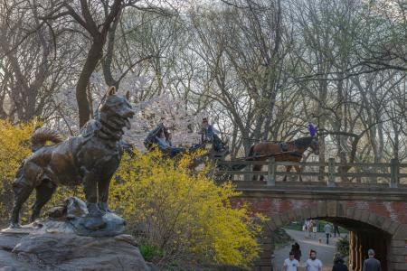 Central Park, statue of Iditarod sled dog, Horse Carriage
