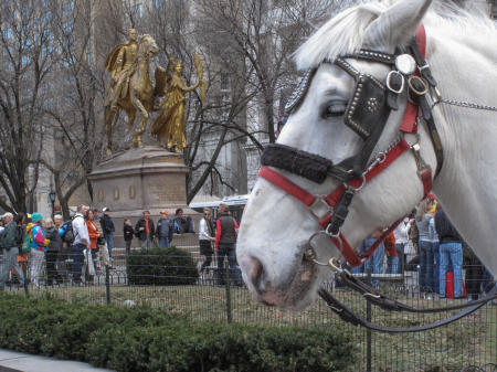 Central Park, Central Park South, Carriage horse