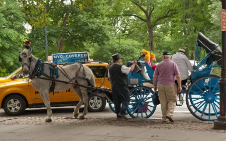 Central Park, Central Park South, Horse & Carriage