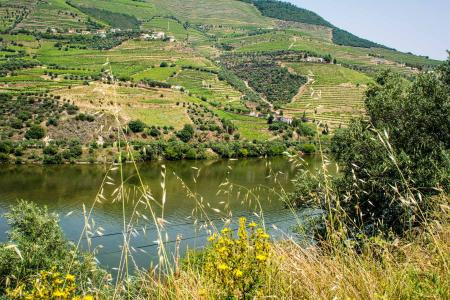 wine estate, Douro  Valley