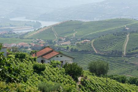 Wine Estate, 